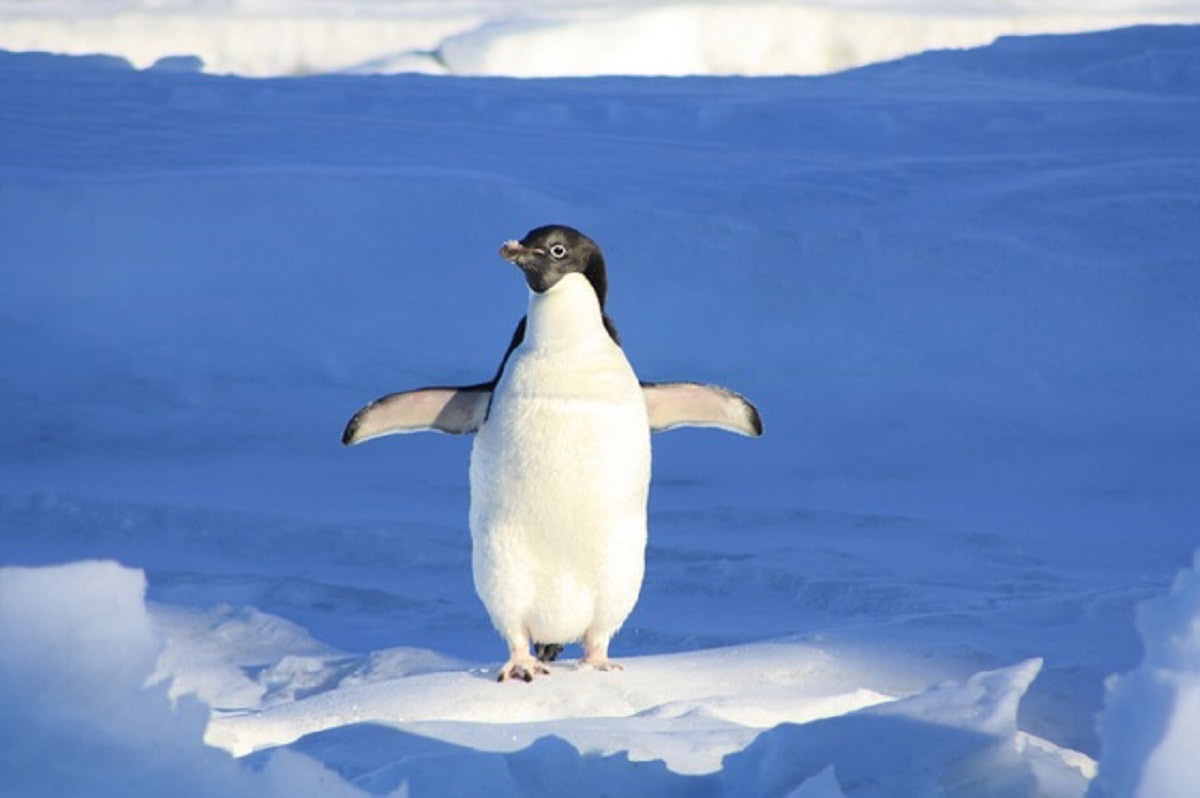 observing penguins to create car software code
